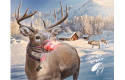 Rudolph at North Pole Photo
