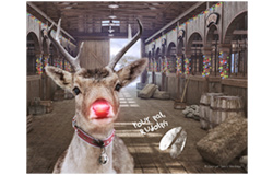Rudolph in Stable